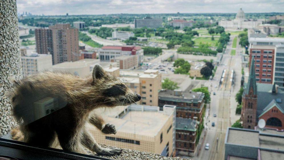 - Bildquelle: Evan Frost/Minnesota Public Radio/dpa