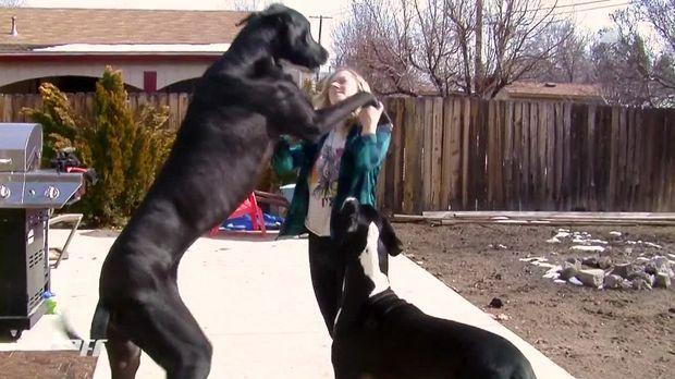 Redstyle Video Das Leben Des Größten Hundes Der Welt Sixx