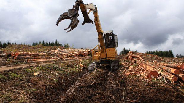 Vier Teams aus Holzfällern liefern sich im harten Wettbewerb im Nordwesten de...