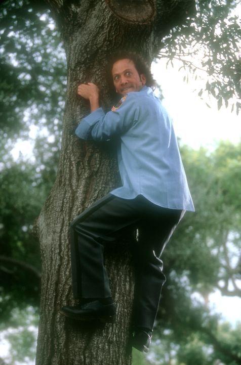 Noch fürchtet der überaus ängstliche Marvin (Rob Schneider) Hunde und allerlei anderes Getier. Doch dann findet eine wundersame Wandlung statt ... - Bildquelle: 2003 Senator Film