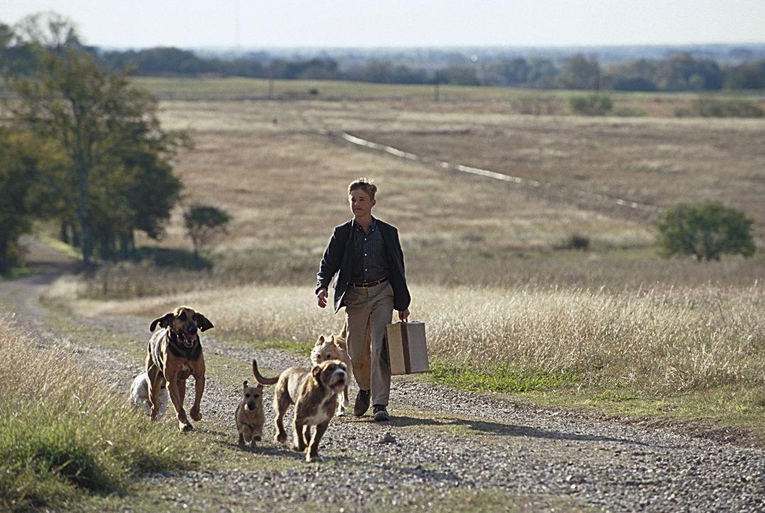 Walter (Haley Joel Osment) macht Ferien bei seinen beiden schrulligen Onkels ... - Bildquelle: New Line Cinema
