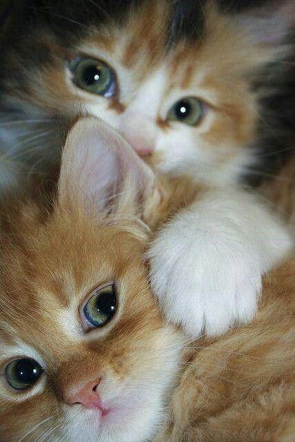 2 Katzen - Bildquelle: Pinterest