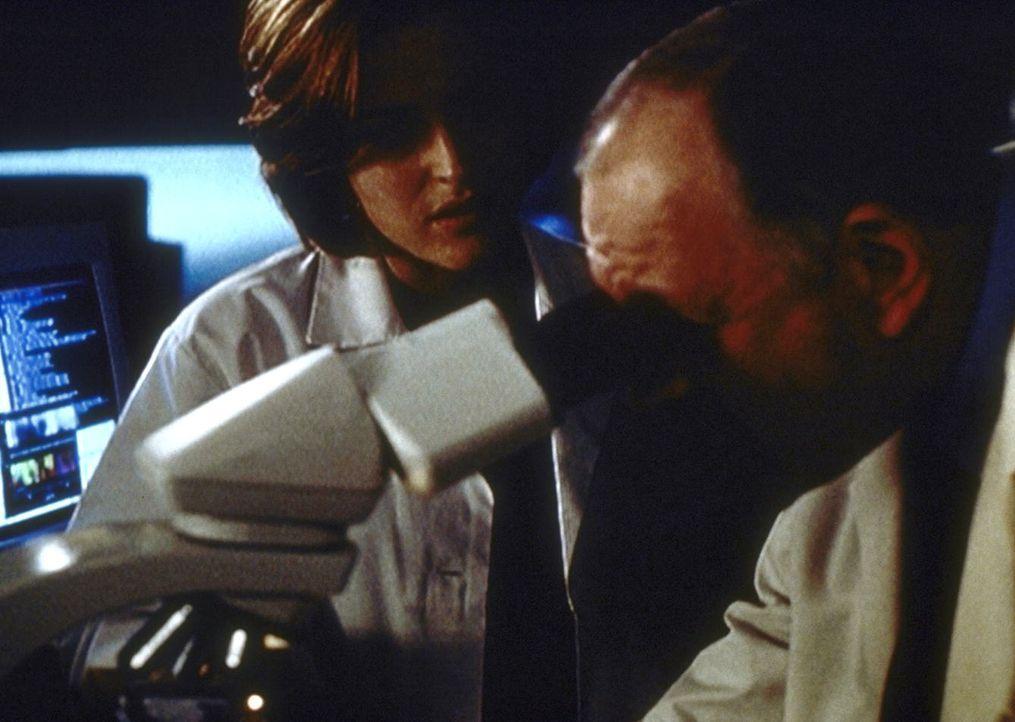 Scully (Gillian Anderson, l.) und Dr. Plant (Kenneth Tigar) stellen fest, dass sich Kohlenstoff in Skinners Blut befindet, was zu den Vergiftungsers... - Bildquelle: TM +   2000 Twentieth Century Fox Film Corporation. All Rights Reserved.