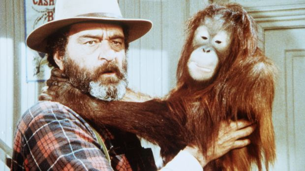 Edwards (Victor French) hat das Orang-Utan-Baby Blanche in Olesons Laden gefu...