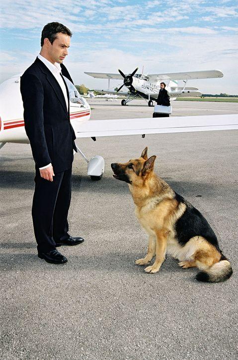 Kommissar Brandtner (Gedeon Burkhard) hat Rex in letzter Sekunde aus dem Flugzeug befreien können. - Bildquelle: Ali Schafler Sat.1