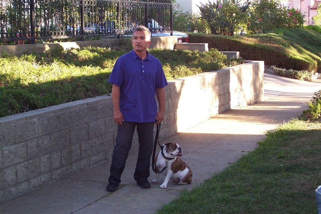 Cesar Millan hatte bereits mit allen Rassen von Hunden und mit vielfältigen Problemen zu kämpfen. Heute kümmert er sich um die dickköpfige Bulldogge... - Bildquelle: Rive Gauche Television