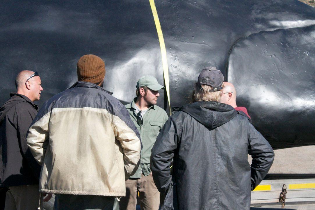 """Ein """"Fake-Hai"""" wird vom Forscherteam um den Meeresbiologen Collin Drake (M.) als Lockvogel eingesetzt. Wird es den Forschern gelingen, damit den ech... - Bildquelle: Brian Girard / Kris Olson Discovery Channel"""