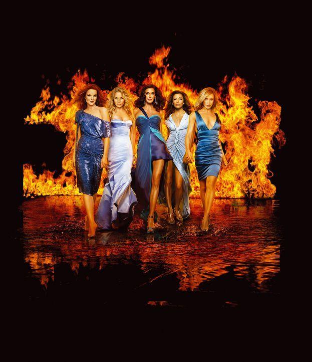 (4. Staffel) - In der Wisteria Lane geht es heiß her: Lynette Scavo (Felicity Huffman, r.), Bree Hodge (Marcia Cross, l.), Gabrielle Lang (Eva Longo... - Bildquelle: ABC Studios