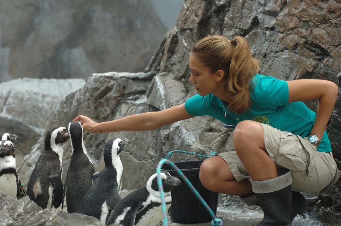 Eines Tages verliebt sich die Tierpflegerin Cam (Jessica Alba) unsterblich in einen Mann, der mit einem Fluch belegt wurde als er 10 Jahre alt war ... - Bildquelle: 2007 Lions Gate Films, Inc. All Rights Reserved.