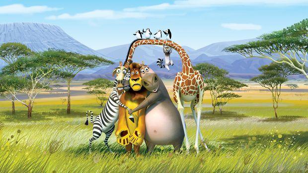 Die New Yorker Zootiere Alex (2.v.l.), Marty (l.), Gloria (2.v.r.) und Melman...