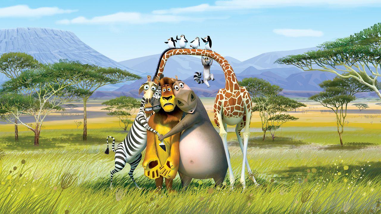 Die New Yorker Zootiere Alex (2.v.l.), Marty (l.), Gloria (2.v.r.) und Melman (r.) wollen wieder nach Hause zurück. Doch sie landen in Afrika. Und... - Bildquelle: (2008) DREAMWORKS ANIMATION LLC. ALL RIGHTS RESERVED.