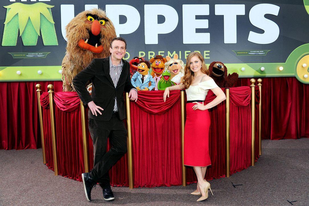 muppets-premiere-la-jason-segel-amy-adams2-wireimagejpg 1900 x 1265 - Bildquelle: WireImage