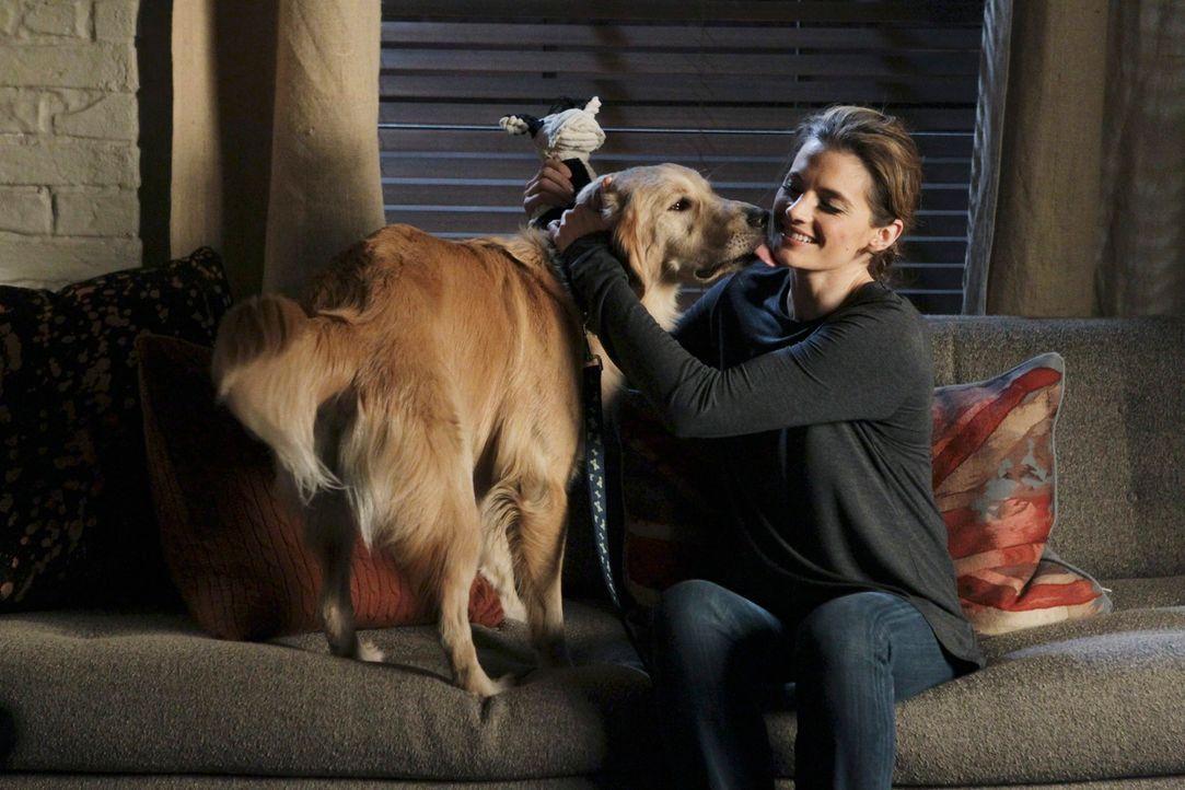 """Kate Beckett (Stana Katic) hat den Retriever """"Royal"""" sofort ins Herz geschlossen ... - Bildquelle: ABC Studios"""