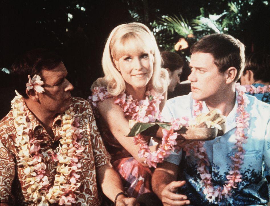 Tony (Larry Hagman, r.) und Roger (Bill Daily, l.) nehmen in Hawaii an einem traditionellen Festessen teil, bei dem auch Jeannie (Barbara Eden, M.)... - Bildquelle: Columbia Pictures