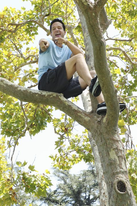 Hat viel Spaß: Grayson (Josh Hopkins) ... - Bildquelle: 2010 ABC INC.