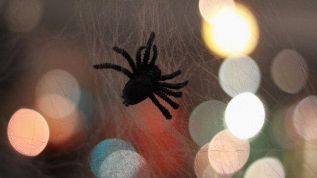 Mit PFeifenreiniger gebastelte Spinne sitzt in künstlichem Spinnennetz