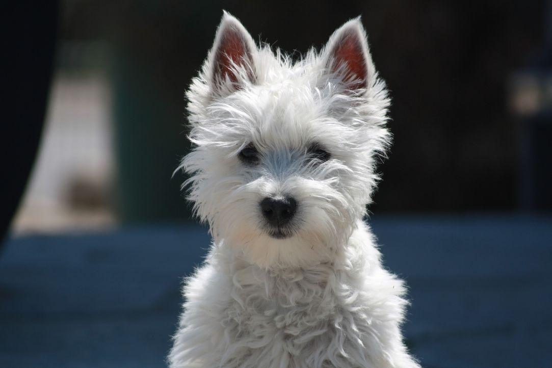 dog-2858271_1920 - Bildquelle: Pixabay