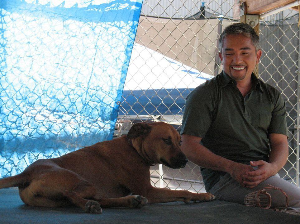 Hundeflüsterer Cesar Millan kümmert sich heute um die Rigdeback-Boxer-Mischlingshündin Chipper. - Bildquelle: Rive Gauche Intern. Television