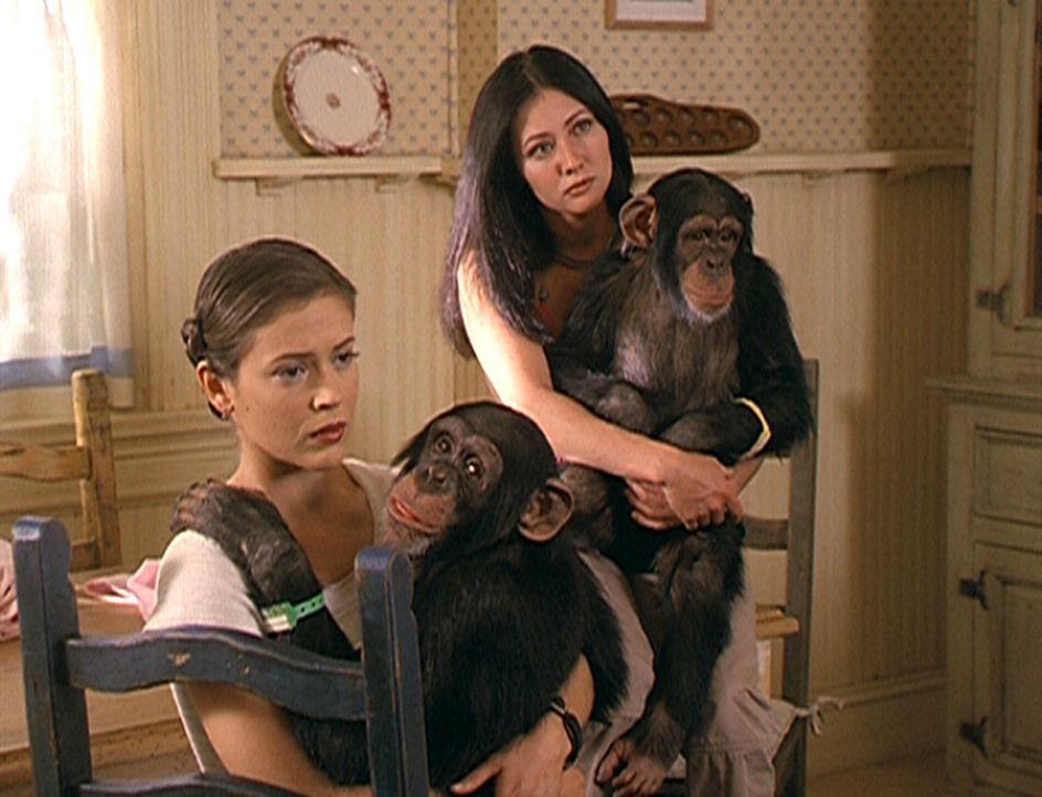 Phoebe (Alyssa Milano, l.) und Prue (Shannen Doherty, r.) sind etwas ratlos. Noch können sie nicht erklären, warum die Schimpansen genau dieselben F... - Bildquelle: Paramount Pictures