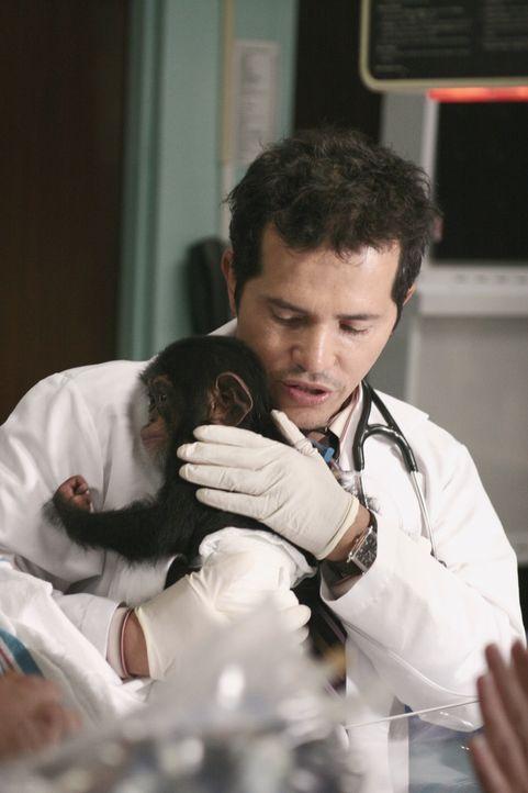 Versucht einem Schimpansenbaby das Leben zu retten: Clemente (John Leguizamo) ... - Bildquelle: Warner Bros. Television