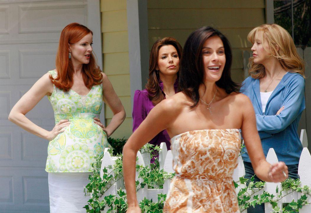 Lynette (Felicity Huffman, r.), Bree (Marcia Cross, l.), Gabrielle (Eva Longoria, 2.v.l.) und Susan (Teri Hatcher, 2.v.r.) beobachten gespannt, wie... - Bildquelle: ABC Studios