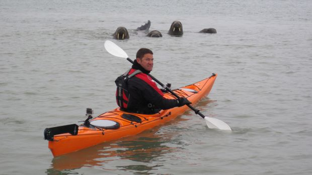 Vor der Küste Spitzbergens fährt Steve Backshall in Begleitung von Walrossen...