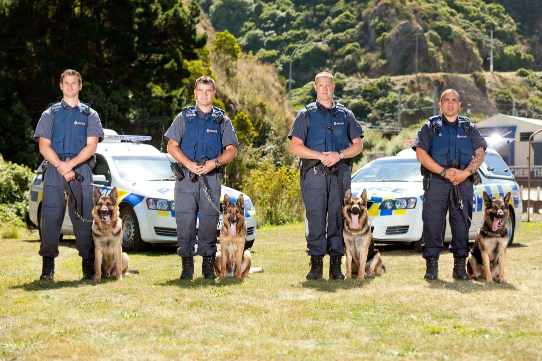 Dennis und der neunjährige Polizeihund Max gehen heute in Waikato auf Verbre... - Bildquelle: Greenstone TV Ltd