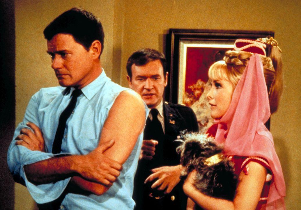 Jeannie (Barbara Eden, r.) hat Besuch aus Bagdad bekommen: einen kleinen Hund. Tony (Larry Hagman, l.) und Roger (Bill Daily, M.) wollen, dass er na... - Bildquelle: Columbia Pictures