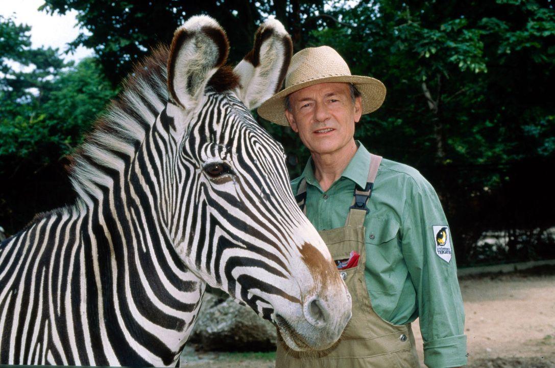 Der Mann mit den 1000 Gesichtern (Joachim Bissmeier) hat sich in den Wiener Zoo geflüchtet ...