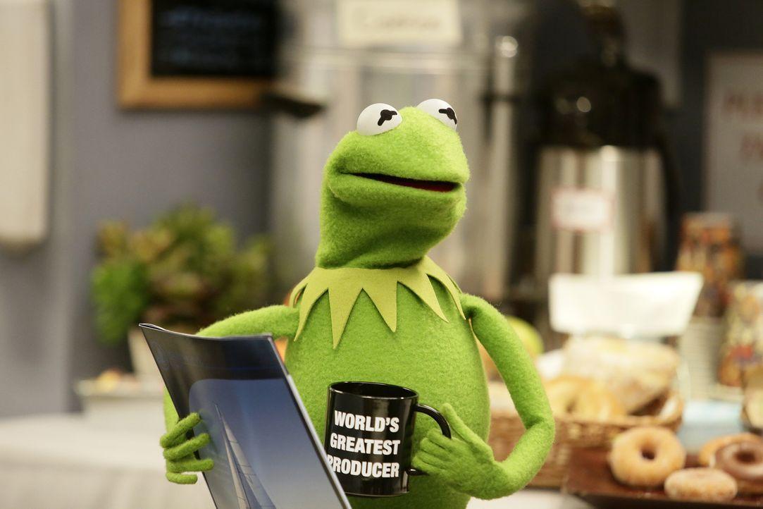 Braucht einen Ersatz für Fozzie: Kermit ... - Bildquelle: Nicole Wilder ABC Studios