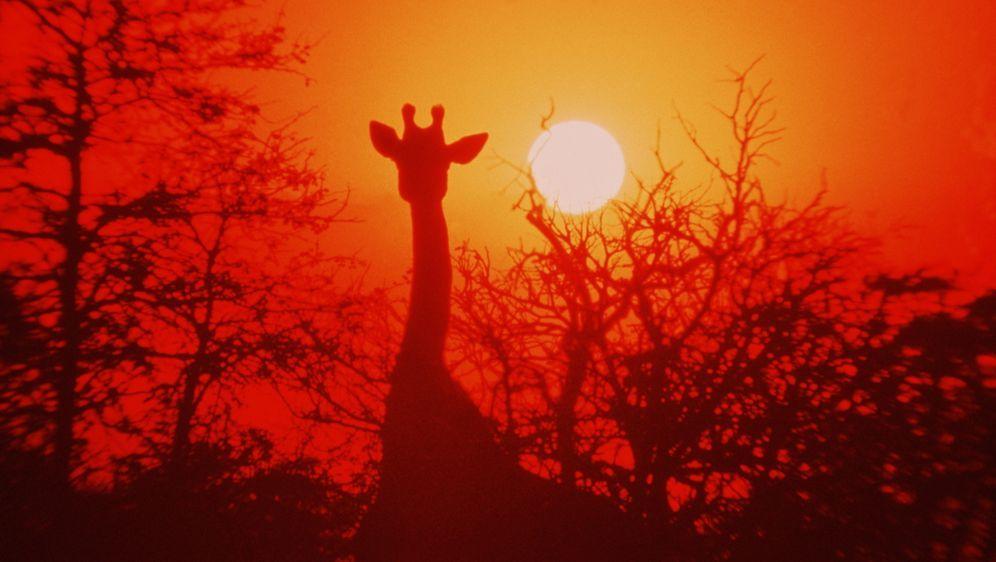 Die lustige Welt der Tiere - Bildquelle: Warner Bros. Pictures