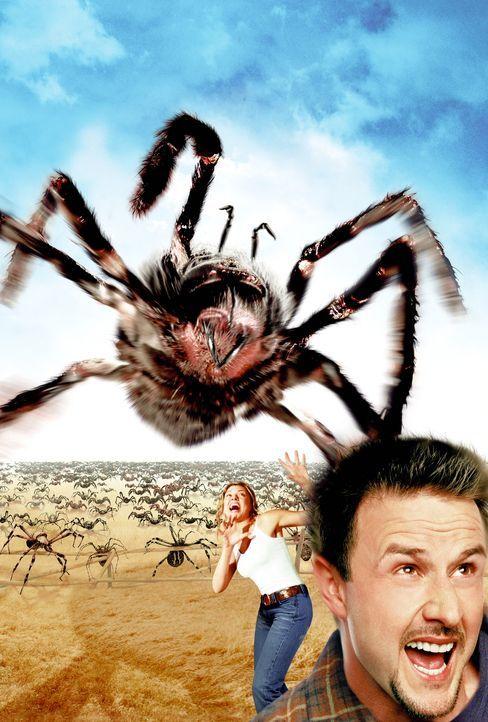 Nimmt den Kampf gegen Riesenspinnen auf: Chris McCormick (David Arquette, r.) - Bildquelle: Warner Bros. Pictures