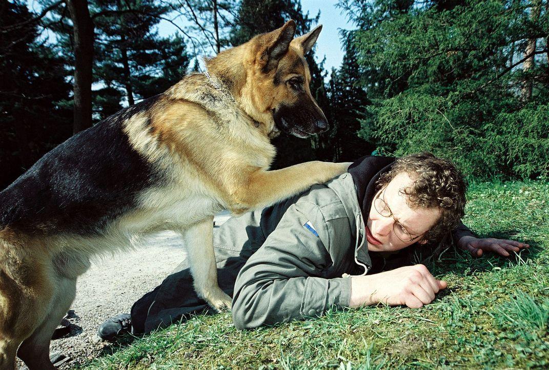Rex ist zufrieden: Er hat den Mann (Holger Schober) überlistet, der einen kleinen Hund vergiftet hat. - Bildquelle: Ali Schafler Sat.1