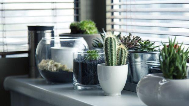 pots-716579
