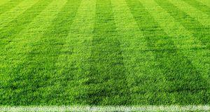 Gartengestaltung_2015_11_26_Sportrasen_Bild 1_fotolia_jarma