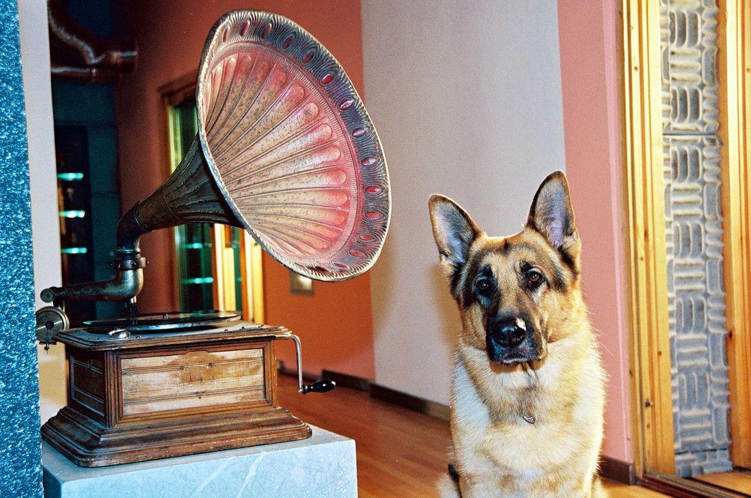 Wer hätte das gedacht? Rex ist ein echter Musik-Liebhaber! - Bildquelle: Sat.1