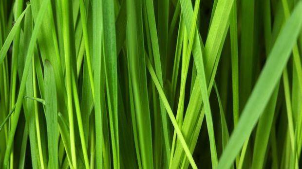 Wiese-Gras-Rasen-pixabay