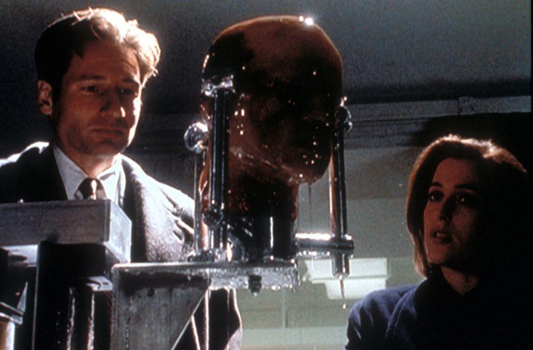 Mulder (David Duchovny, l.) und Scully (Gillian Anderson, r.) untersuchen den abgetrennten Kopf eines bei einem Verkehrsunfall getöteten Mannes. - Bildquelle: TM +   2000 Twentieth Century Fox Film Corporation. All Rights Reserved.