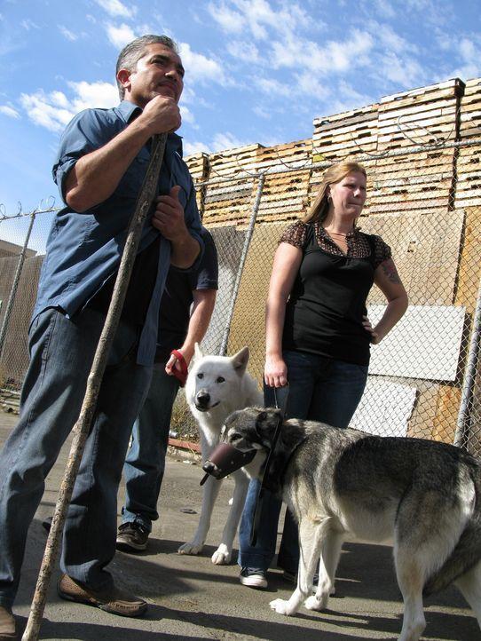 Holly (r.) bittet den Hundeflüsterer Cesar Millan (l.) um Hilfe, denn ihre beiden Wolfsmischlinge sind alles andere als pflegeleicht. Kann man Wölfe... - Bildquelle: Rive Gauche Intern. Television