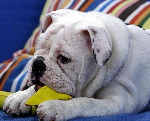 fruehstuecksfernsehen-studiohund-lotte-baby-004 - Bildquelle: Stefan Pulvermüller