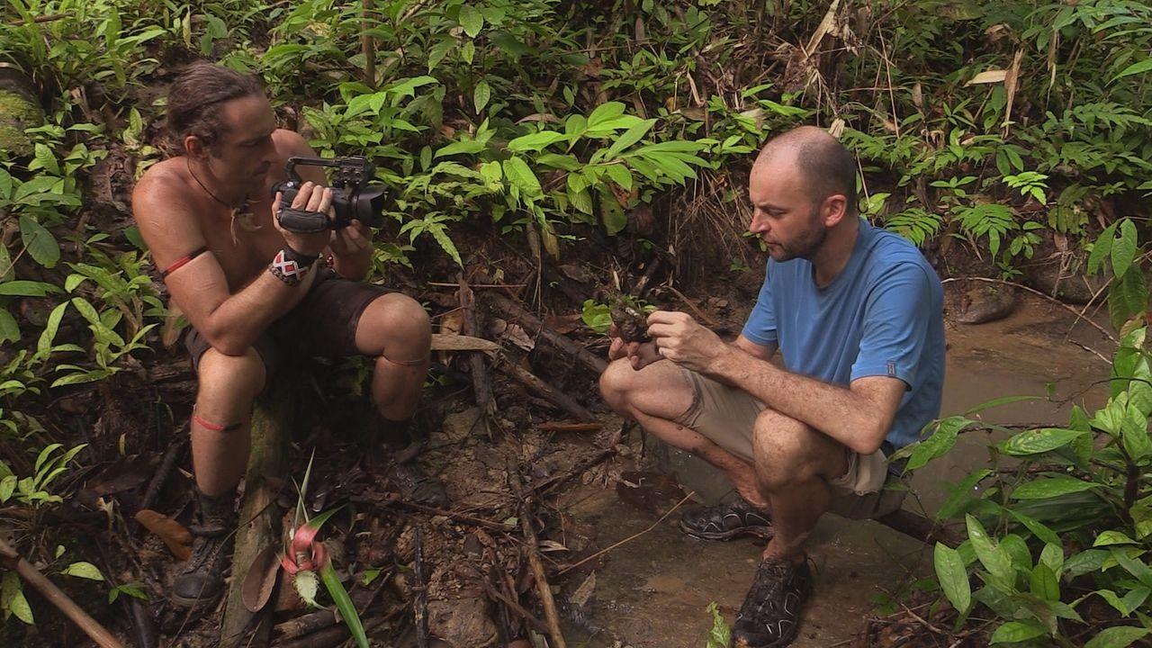 Sumatra 24 - Bildquelle: kabel eins