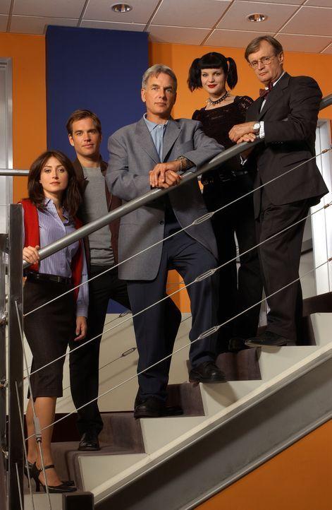 (1. Staffel) - Die behandelten Fälle der NAVY CIS reichen von Spionage, Tötungsdelikten bis hin zu Terrorismus und gestohlenen U-Booten. Die Agenten... - Bildquelle: CBS Television