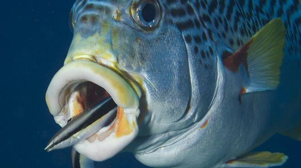 Grausamkeit und Schönheit - unter Wasser liegen sie nicht mal einen Flossensc...