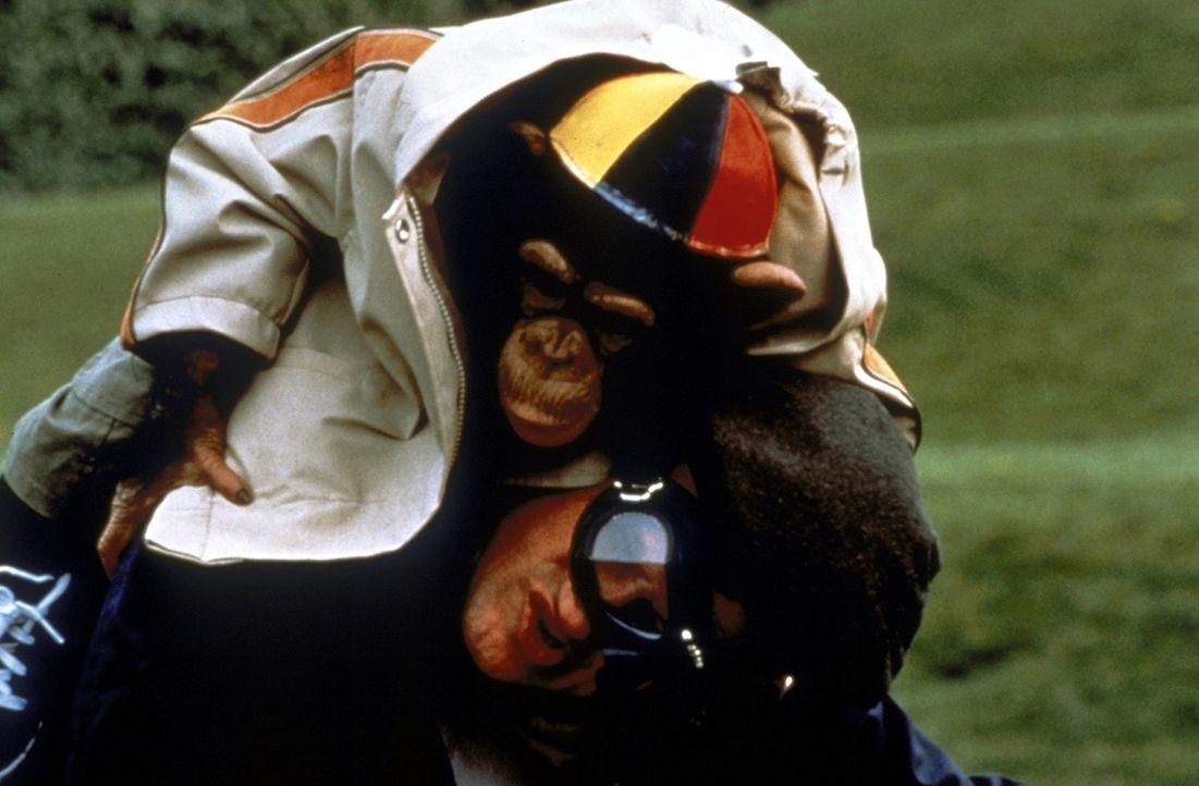 Jack ist kein gewöhnlicher Schimpanse. Er besitzt außergewöhnliche Fähigkeiten, die Dr. Kendall jahrelang trainiert hat ...