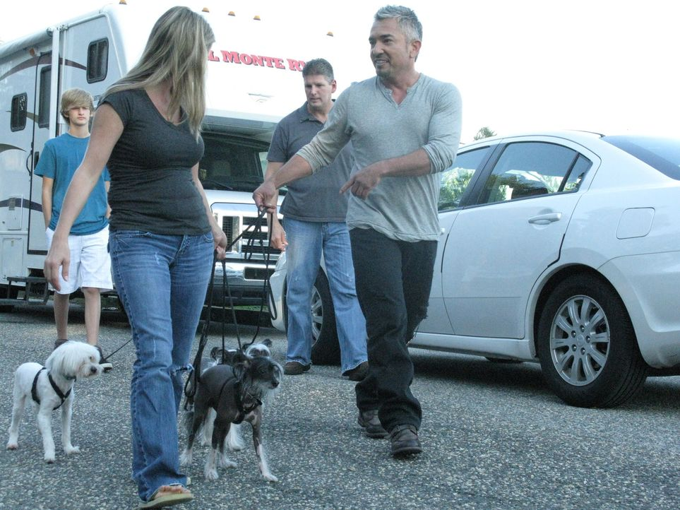Vier aufgeregte Chinesische Schopfhunde warten auf Cesars (r.) Ankunft. Die Hunde verwandeln das Zuhause ihrer Besitzer in das reinste Chaos. - Bildquelle: Ryan Cass MPH - Emery/Sumner Joint Venture