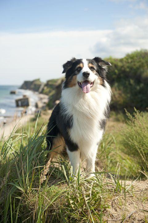Steht den Freunden bei ihrem Abenteuer zur Seite: Hund Timmy ... - Bildquelle: 2011 Constantin Film Verleih GmbH