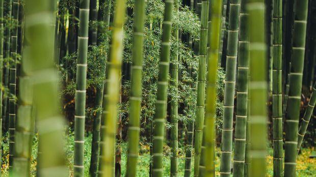sichtschutz aus bambus - sat.1 ratgeber, Wohnzimmer dekoo