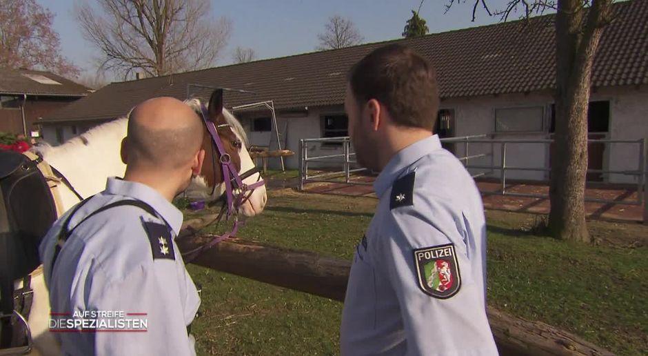 Auf Streife Die Spezialisten Video Da Steht Ein Pferd Auf