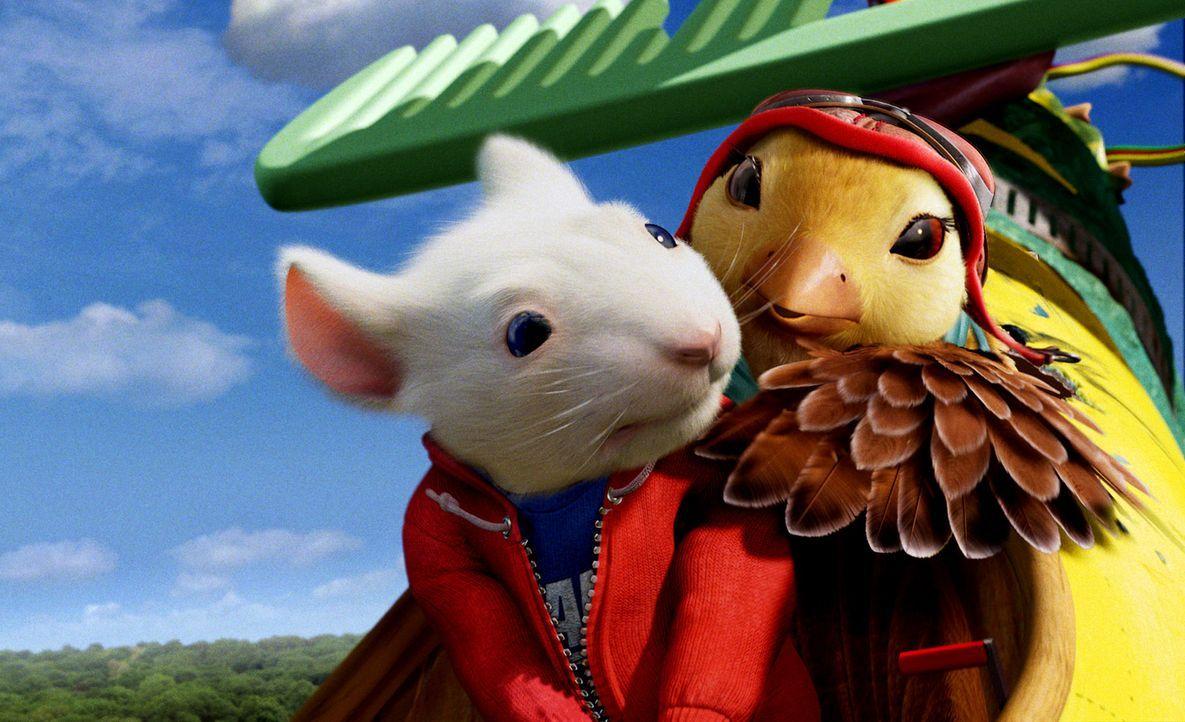 Stuart (l.) findet in dem süßen Vögelchen Margalo (r.) endlich eine neue Freundin, die in der Familie Little herzlich aufgenommen wird. Doch Marg... - Bildquelle: 2003 Sony Pictures Television International. All Rights Reserved.