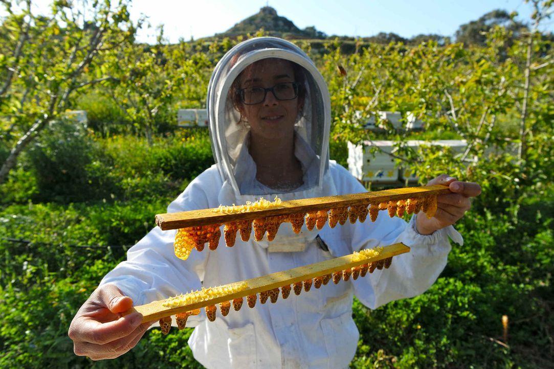 Keine leichte Arbeit: Die Waben, in denen die Bienenköniginnen heranwachsen, müssen mit besonderer Vorsicht behandelt werden. Sarah Ruta kümmert sic... - Bildquelle: ProSieben